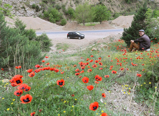 Our rental car amidst spring flora, while we were waiting for the road to open again.