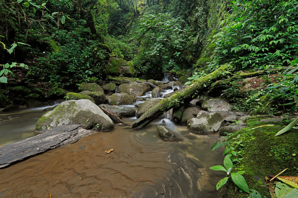 Habitat of Pacific Litter Frog and Common Worm Salamander.