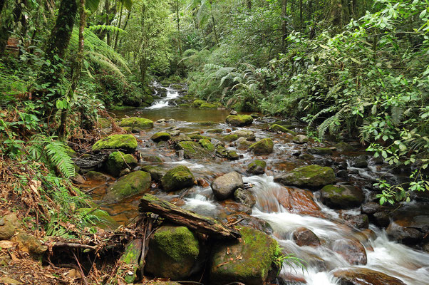 Beautiful stream in the cloud forest.