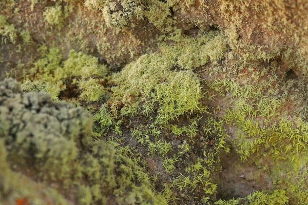 Sulphur crystals.