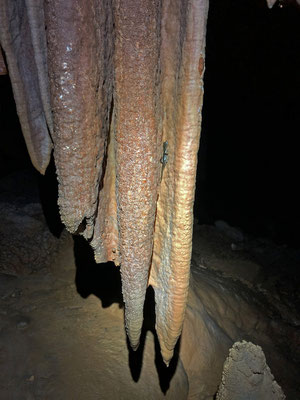 Sopramonte Cave Salamander (Speleomantes supramontis) hanging on a stalactite.