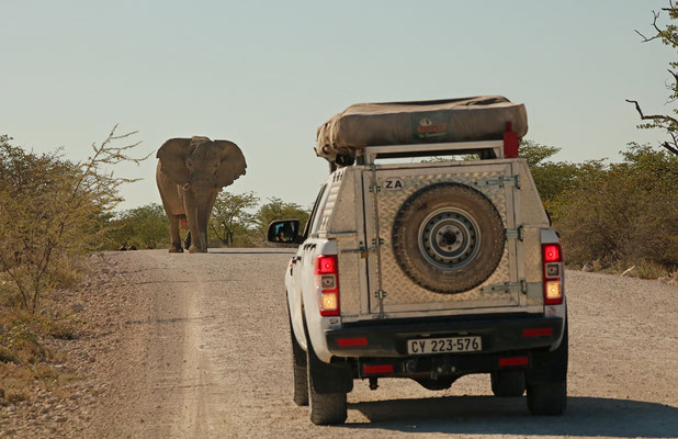This Elephant bull made it clear we (and the car in front of us) had to back up a little.