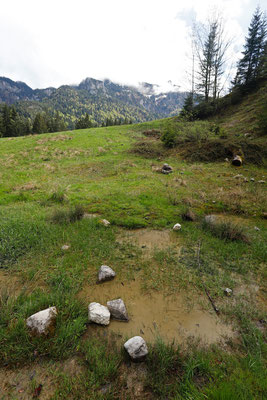 Alpine habitat of Alpine Newt and Yellow-bellied Toad.