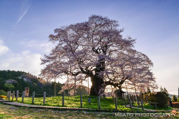 OKAYAMA Province - Maniwa city, Daigo sakura.