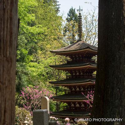29 - Província de NARA. Pagoda de cinco telhados do templo Murouji. Também conhecido por Nionin Koya por permitir o acesso de mulheres ao templo desde épocas remotas, nesta época, muitos templos não autorizavam entrada de pessoas do sexo feminino.