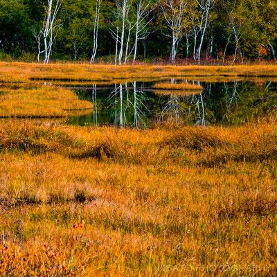 GUNMA Province - Parque Nacional Oze(Ozegahara)_03