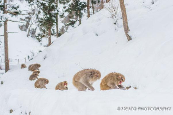 Jigokudani Monkey Park, fotografado no dia 13 de março, província de Nagano(16)