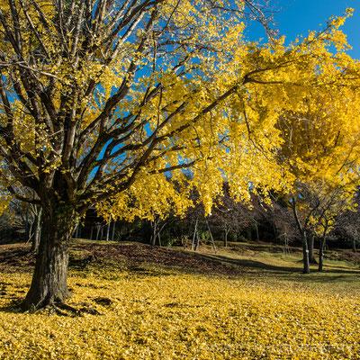 NARA Province - Nara city, parque de Nara_01.