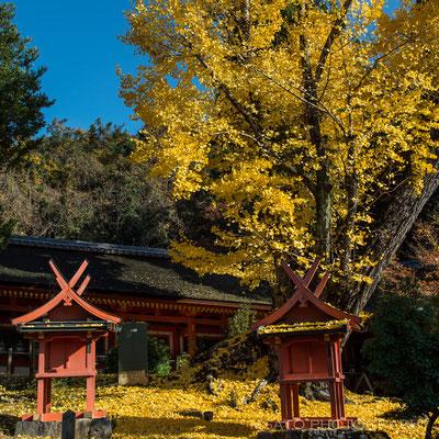 NARA Province - Nara city, parque de Nara_04