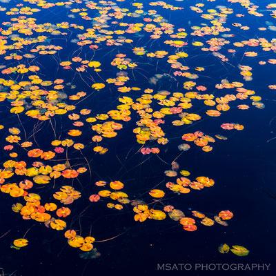 GUNMA Province - Parque Nacional Oze(Ozegahara)_02
