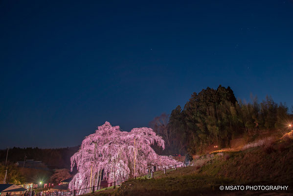 7 - Miharu waterfall cherry tree. One of Japan's most beautiful sakura tree under the moonlight, located in Fukushima Prefecture.