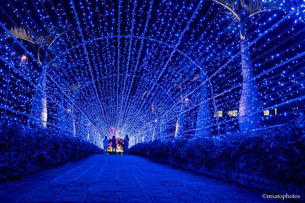 OKINAWA Province - Jardim botânico_04.