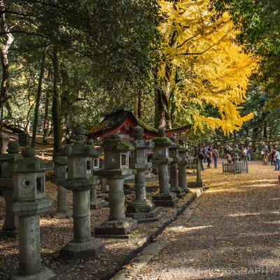 NARA Province - Nara city, parque de Nara_02