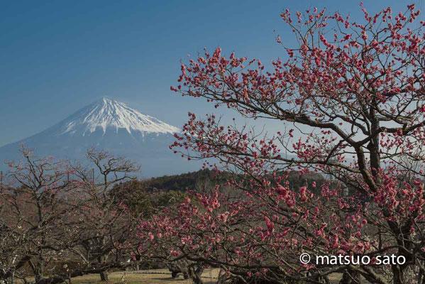 24 de fevereiro a partir da cidade de Fujiyoshida, província de Shizuoka(21).