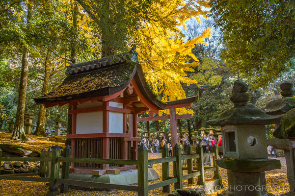 NARA Province - Nara city, parque de Nara_03