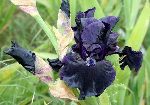 Obsidian     N. Smith  2002      N°10 AM06