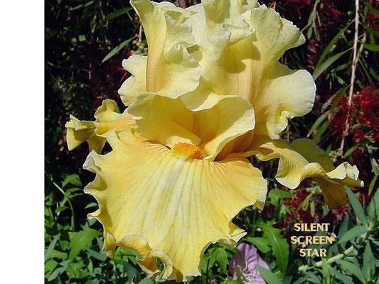 SILENT SCREEN STAR      Ghio 2006
