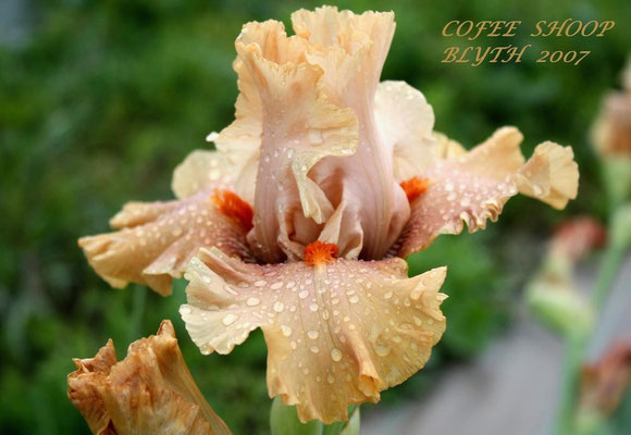 Cofee Shoop    Blyth 2007