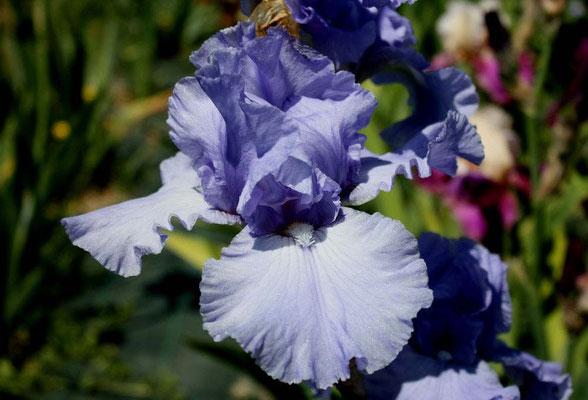 Horizon Bleu Cayeux 90
