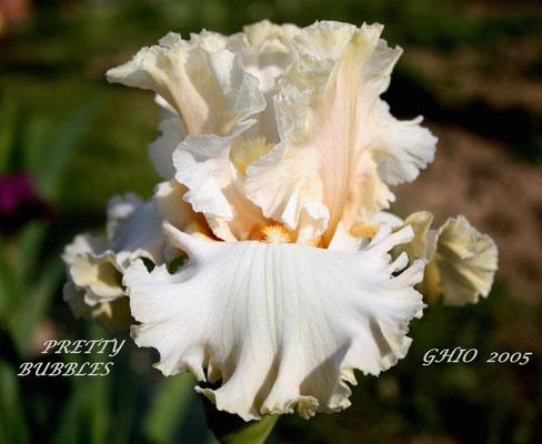 Pretty Bubbles    Ghio 2005   HM07