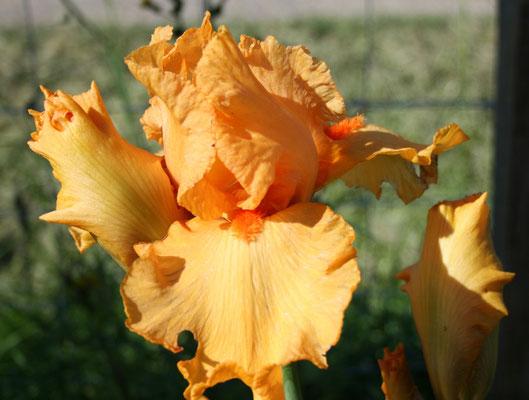 Orange 2000