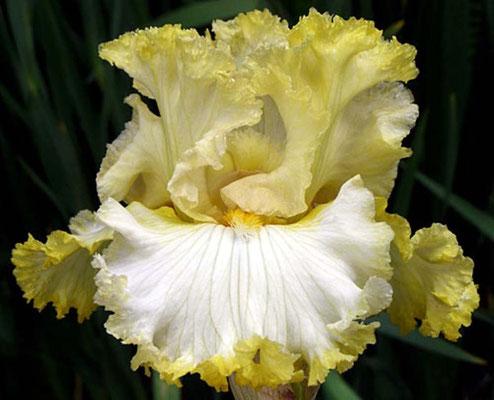 'Lemon Bubbly' SUTTON M. 2011.