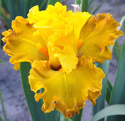 ENDLESS SUNSHINE  BLYTH 2015 V355-1
