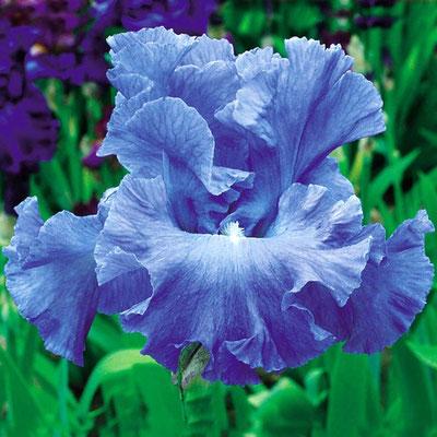 Metolius Blue Schreiner 2000 HM04
