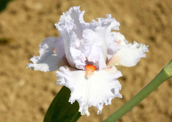 'Vanilla Frappe' SUTTON M. 2011