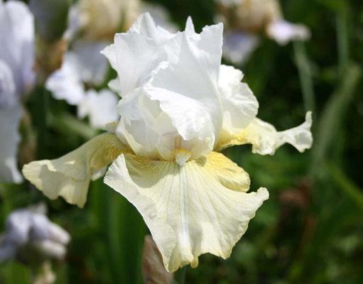 Irish Spring Roe 73