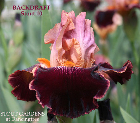 'backdraft' STOUT 2010