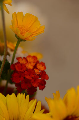 in a vase on monday, iavom, monday vase, small sunny garden, desert garden, amy myers, photography, garden blog