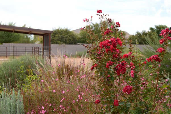 Gaura and Lagerstroemia