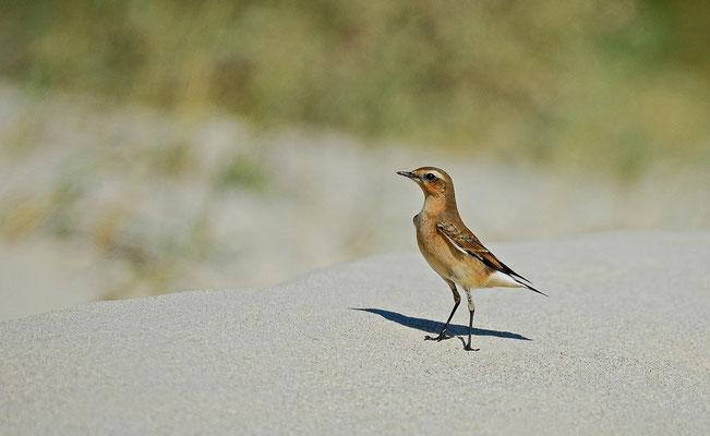 Sur le sable chaud