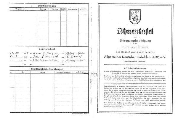 Ahnentafel-Kopie von Elvis Pudel Cherry, Sammlung Online-Museum Bad Nauheim
