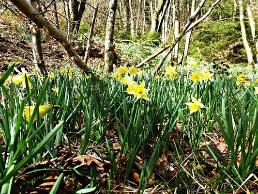 Urlaub auf dem Bauernhof in der Eifel im Frühjahr