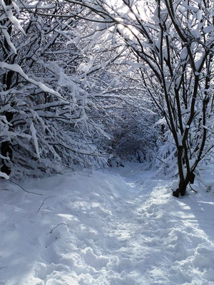 Winter-bauernhofurlaub eifel