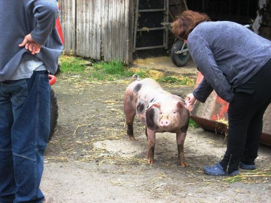 bauernhofurlaub eifel - mit schwein