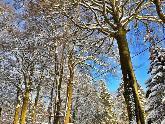 eifel urlaub im schnee