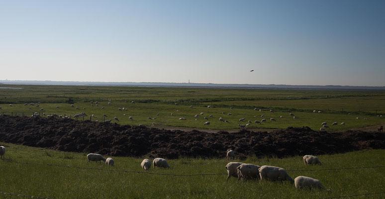 Deich bei Hilgenriedersiel, Blick Richtung Norderney