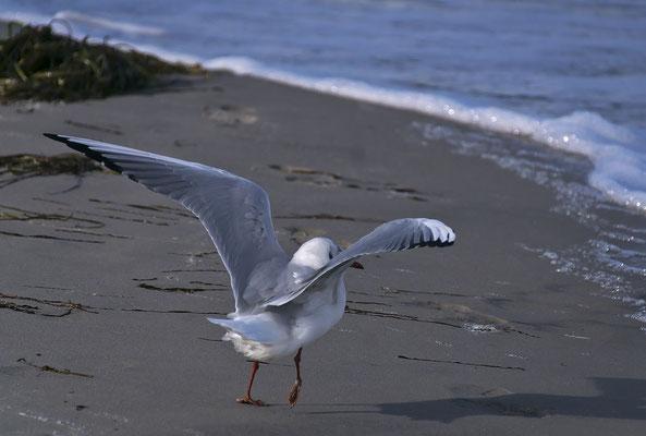Absprung zum Fliegen