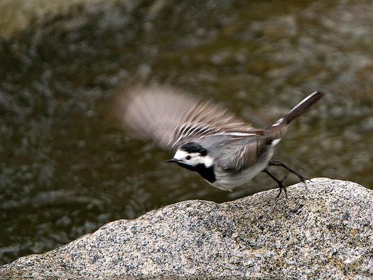 die Eltern-Vögel waren dauernd damit beschäftigt, Futter zu besorgen