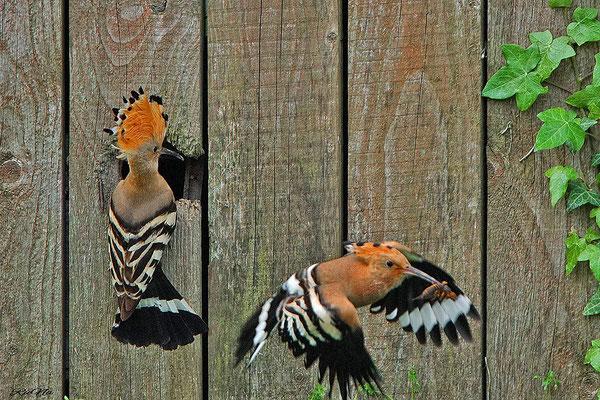 ... er fliegt wild hin und her