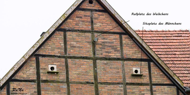 eine Ansicht des Giebels - gebrütet haben die Turmfalken letztendlich in dem linken Kasten