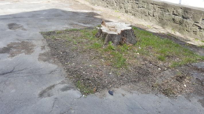 """Als erste Arbeit wurden Bäume auf dem Platz gefällt um den Baustein """"Wege zum Nachdenken"""" umzusetzen"""