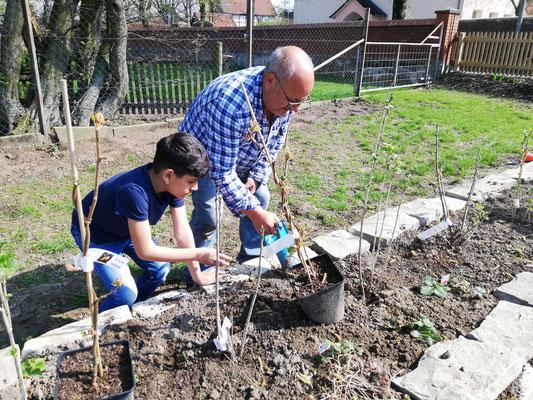 Pietro Basile bekommt tatkräftige Unterstützung im Garten