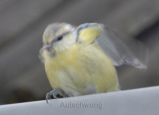 Tierbilder Ines Schröder Wilnsdorf