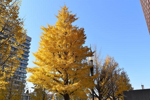 街路樹に使われる木 - 庭木図鑑 ...