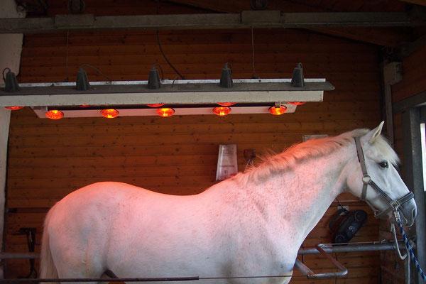 Solarium für Pferde, Reitstall Althof