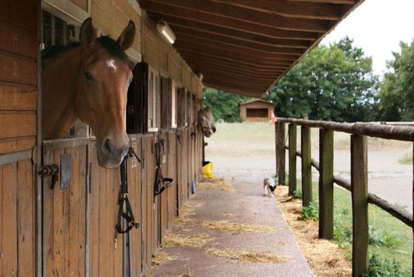 Box für Einstellpferd
